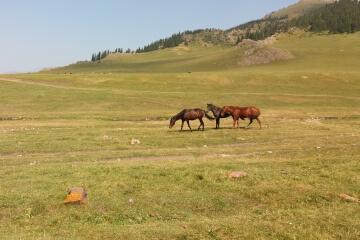 summer-pasture.jpg